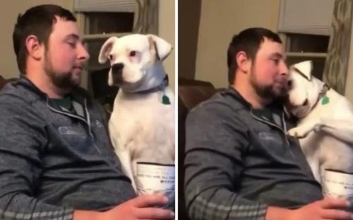 Читать: Сеть насмешила собака, устроившая мастер-класс по выпрашиванию вкусняшек