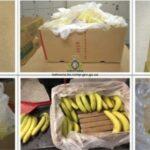 Читать: В канадские супермаркеты случайно завезли бананы, напичканные наркотиками