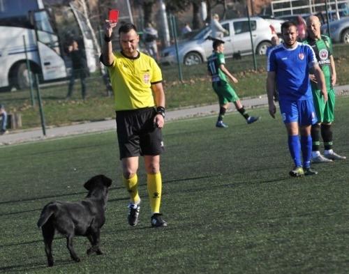 """Собака на футбольном поле получила """"красную карточку"""" от арбитра"""