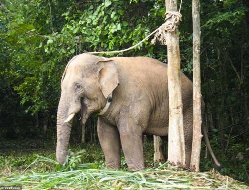 Слон узнал мужчину, спасшего его 12 лет назад