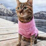 Сеть покорила кошка, путешествующая по миру на велосипеде