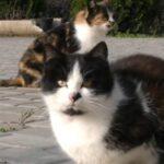 """На Херсонщине мужчина трудоустроил котов: какая у них """"зарплата"""""""