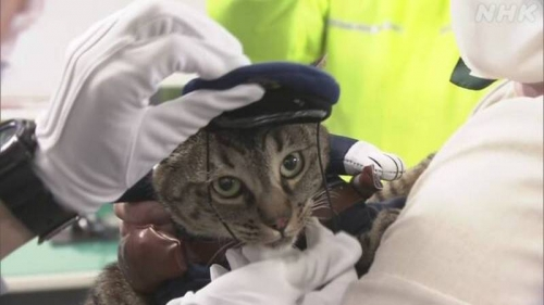 В Японии кота за доблестный поступок назначили главой отдела полиции