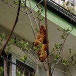 В Кракове спасателям пришлось снимать с дерева круассан
