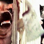 Если бы в культовых фильмах снимались животные: забавные постеры