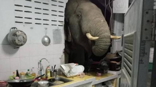 Слон вломился в дом в поисках ужина