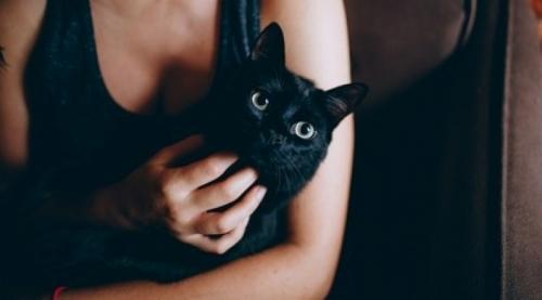 Сеть покорил кот, успокоивший плачущую хозяйку