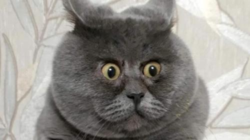 Сеть покорил кот Федя, похожий на Гарфилда