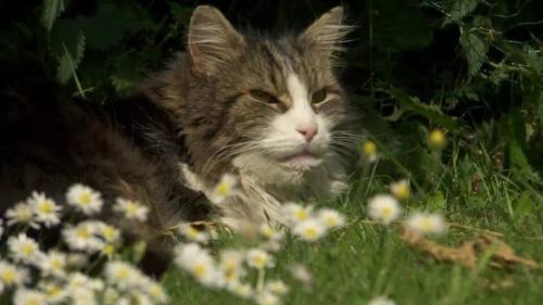 В Англии кот вернулся домой после «кремации»