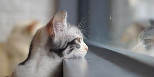 В Австралии для котов ввели круглосуточный «комендантский час»