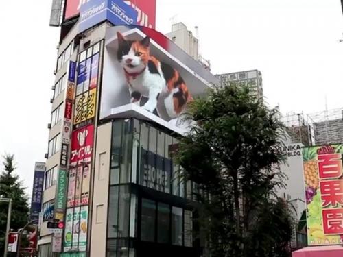 Жителей Токио удивил билборд с огромным мяукающим 3D-котом